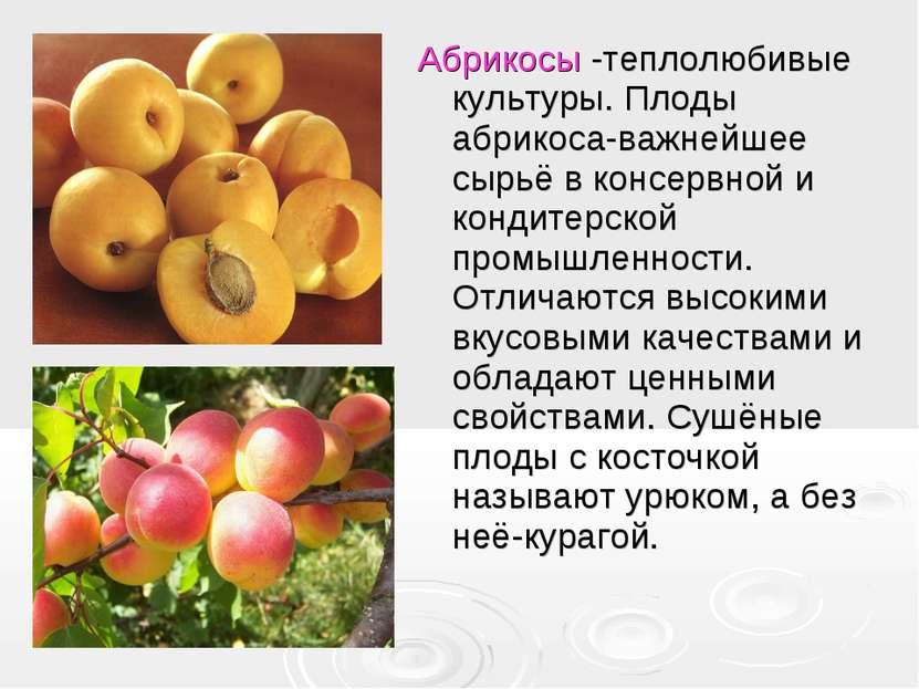 Абрикосы -теплолюбивые культуры. Плоды абрикоса-важнейшее сырьё в консервной ...