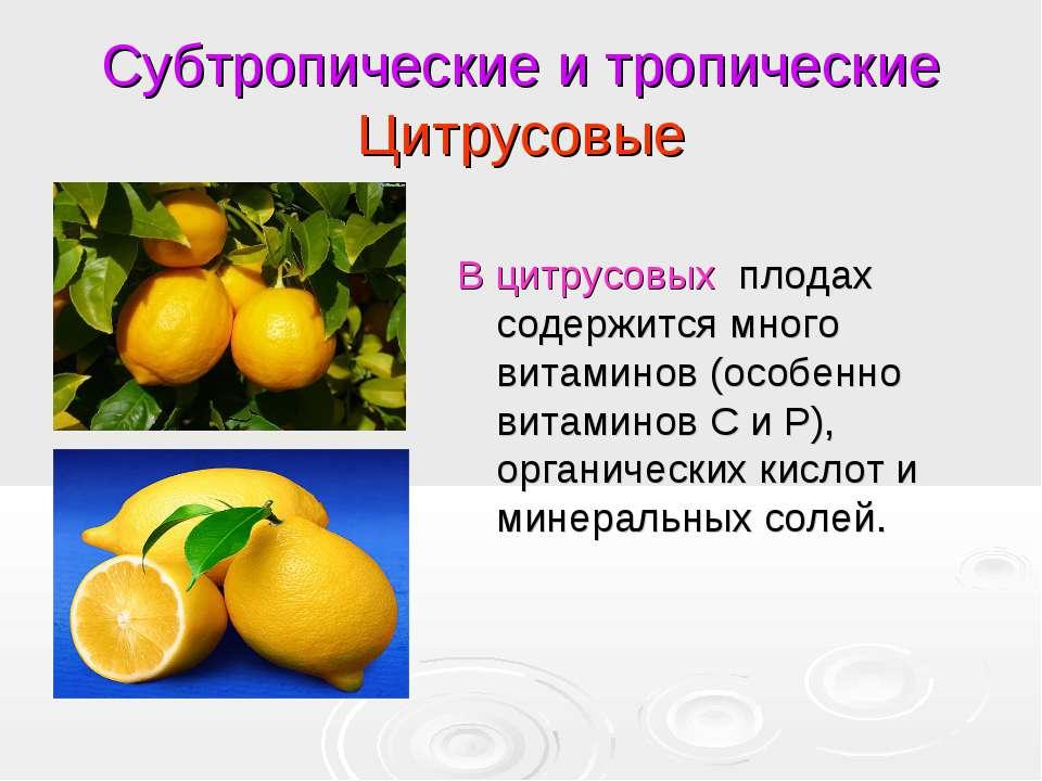 Субтропические и тропические Цитрусовые В цитрусовых плодах содержится много ...
