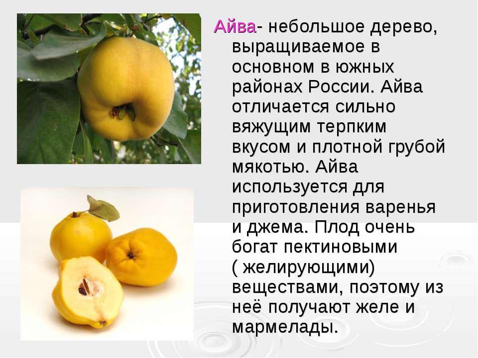 Айва- небольшое дерево, выращиваемое в основном в южных районах России. Айва ...