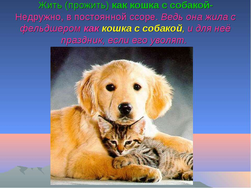 Жить (прожить) как кошка с собакой- Недружно, в постоянной ссоре. Ведь она жи...