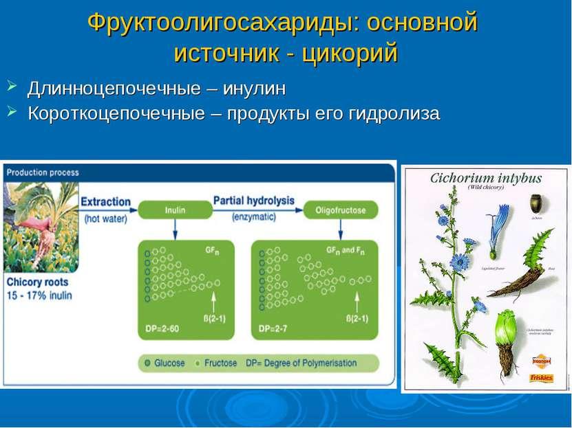 Фруктоолигосахариды: основной источник - цикорий Длинноцепочечные – инулин Ко...