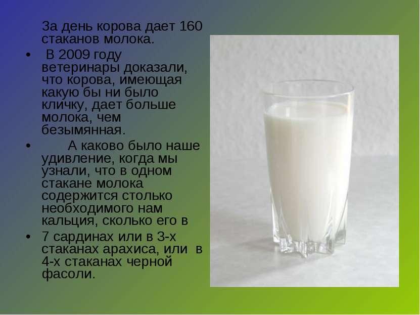 За день корова дает 160 стаканов молока. В 2009 году ветеринары доказали, что...