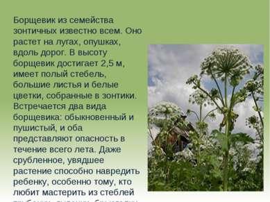 Борщевик из семейства зонтичных известно всем. Оно растет на лугах, опушках, ...