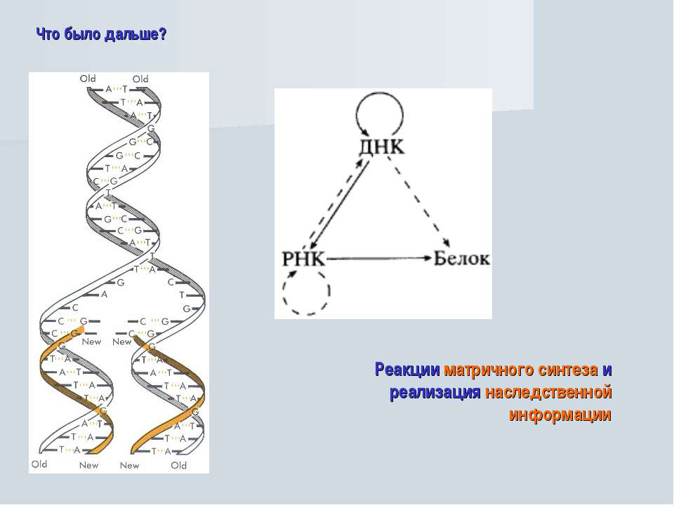 Что было дальше? Реакции матричного синтеза и реализация наследственной инфор...