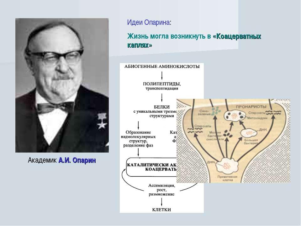 Академик А.И. Опарин Идеи Опарина: Жизнь могла возникнуть в «Коацерватных кап...