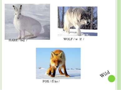 HARE / heə / WOLF / wʋlf / FOX / fɒks / Wild