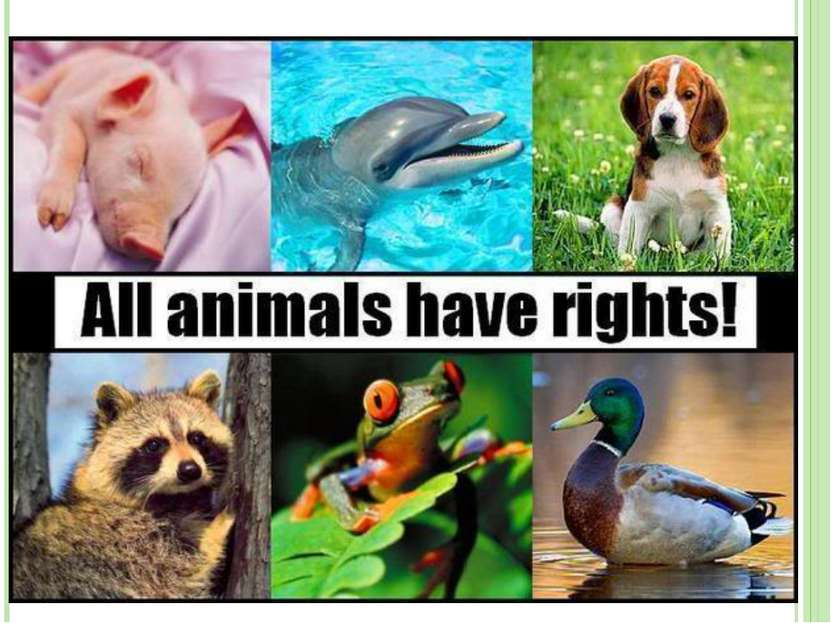 animals and the natural right to