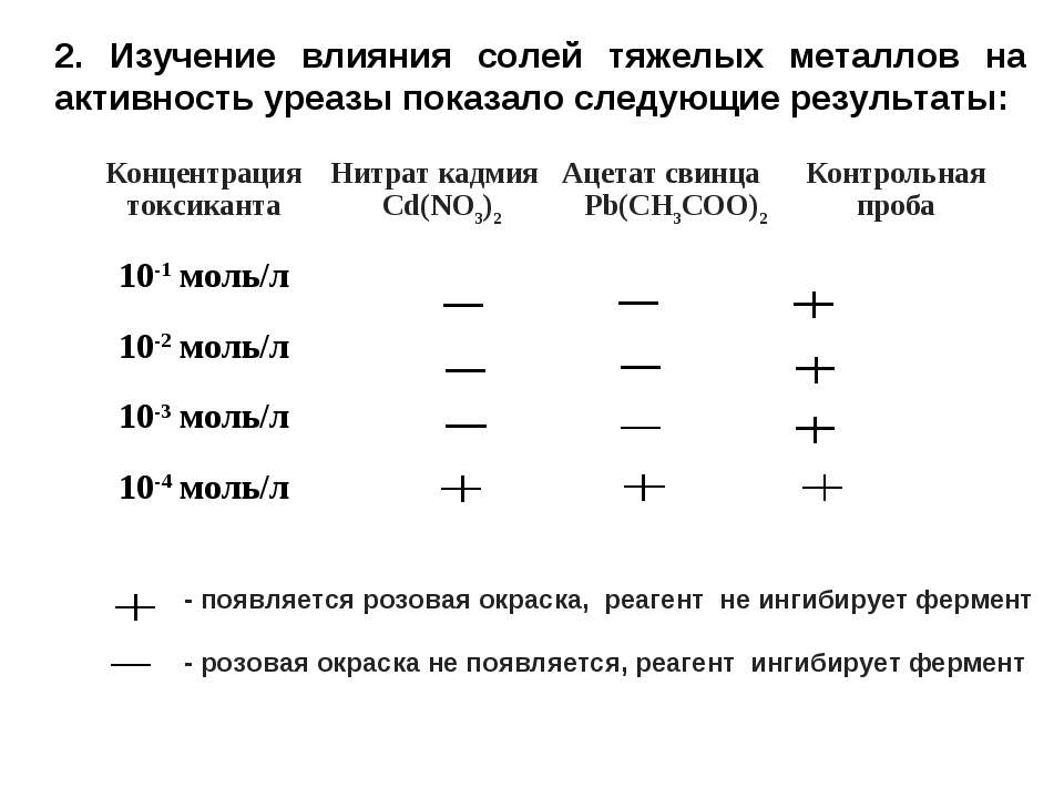 2. Изучение влияния солей тяжелых металлов на активность уреазы показало след...