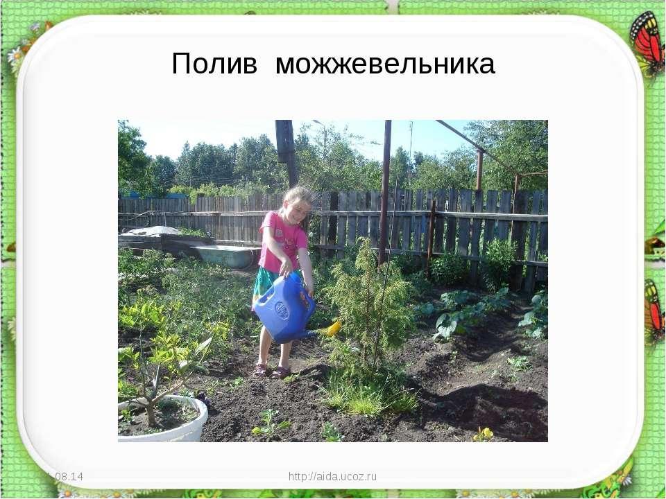 Полив можжевельника * http://aida.ucoz.ru * http://aida.ucoz.ru