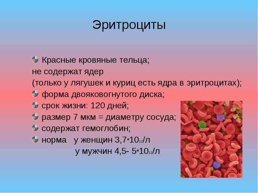 Эритроциты Красные кровяные тельца; не содержат ядер (только у лягушек и кури...
