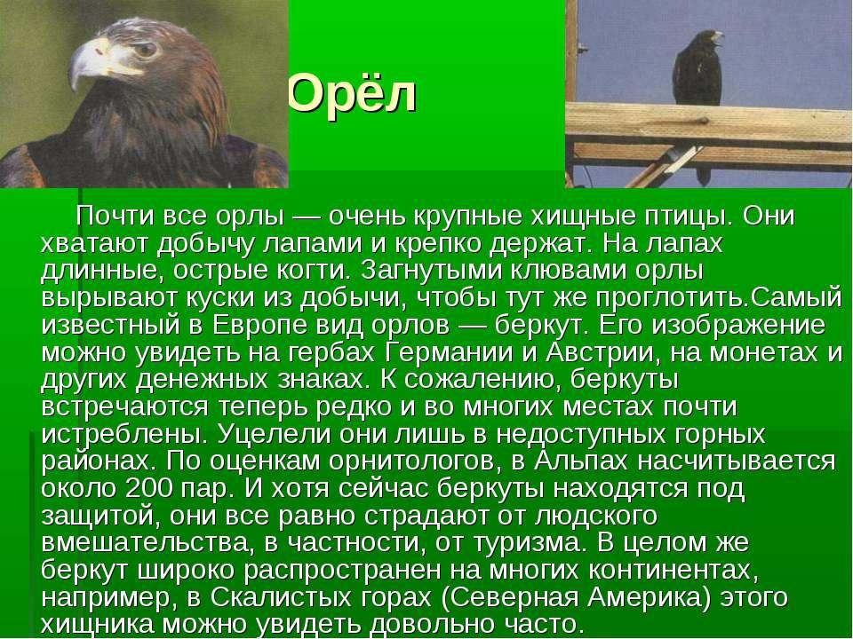 Орёл Почти все орлы — очень крупные хищные птицы. Они хватают добычу лапами и...