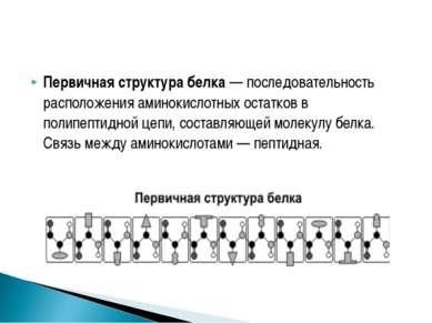 Первичная структура белка — последовательность расположения аминокислотных ос...