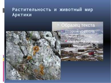 Растительность и животный мир Арктики