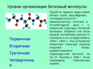 Уровни организации белковый молекулы Первичная Вторичная Третичная Четвертичн...