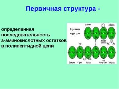 определенная последовательность a-аминокислотных остатков в полипептидной цеп...