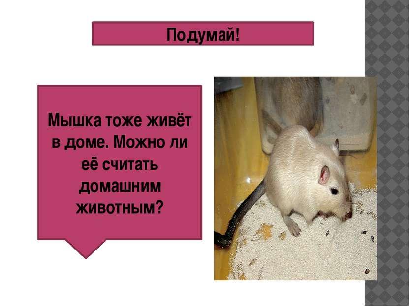 Подумай! Мышка тоже живёт в доме. Можно ли её считать домашним животным?