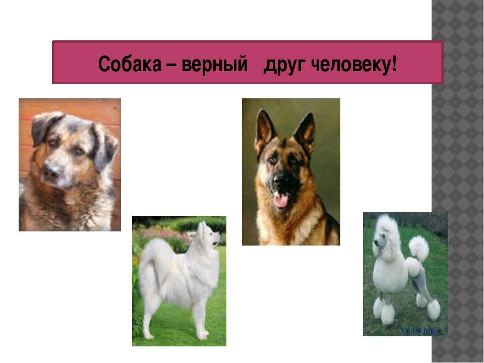 Собака – верный друг человеку!