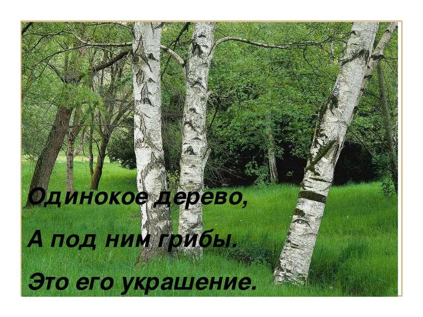 Одинокое дерево, А под ним грибы. Это его украшение. Одинокое дерево, А под н...