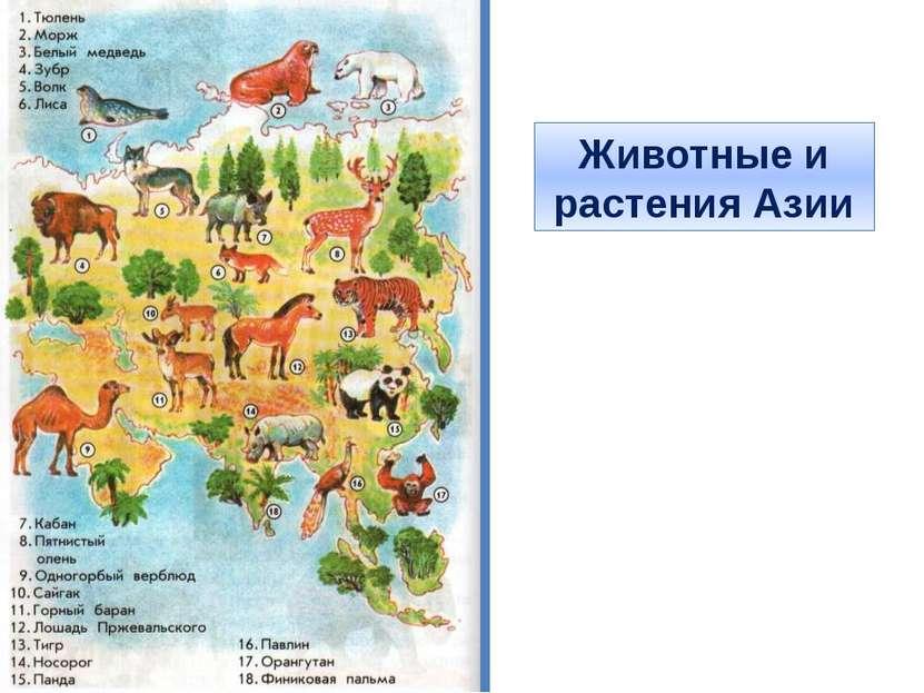 Животные и растения Азии