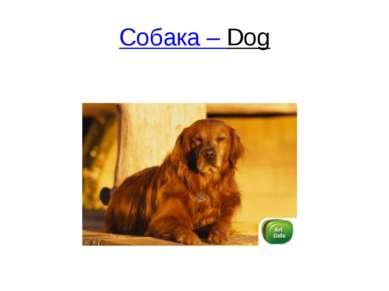 Собака – Dog