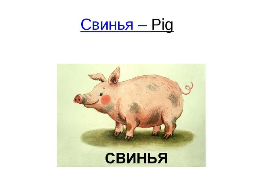 Свинья – Pig