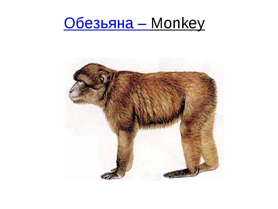 Обезьяна – Monkey