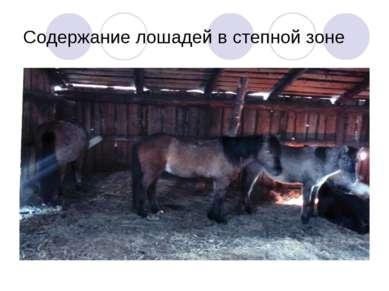 Содержание лошадей в степной зоне