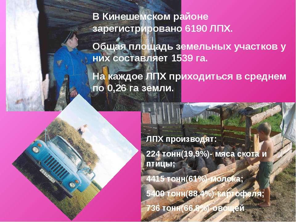 В Кинешемском районе зарегистрировано 6190 ЛПХ. Общая площадь земельных участ...