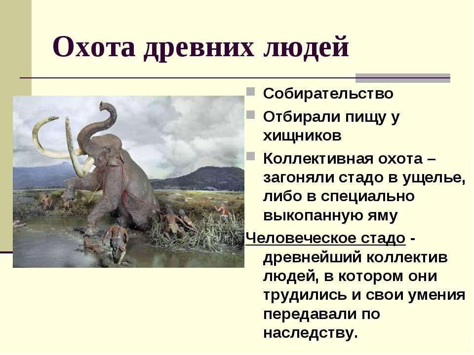 Охота древних людей Собирательство Отбирали пищу у хищников Коллективная охот...