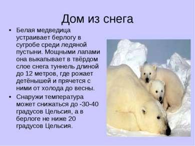Дом из снега Белая медведица устраивает берлогу в сугробе среди ледяной пусты...