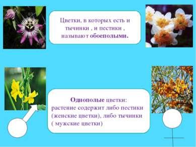 Цветки, в которых есть и тычинки , и пестики , называют обоеполыми. Однополые...