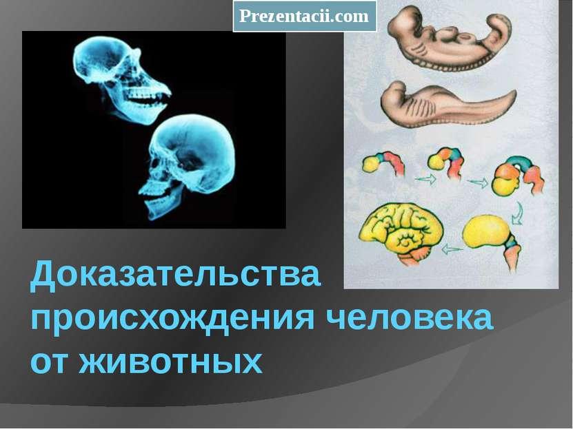 Доказательства происхождения человека от животных Prezentacii.com