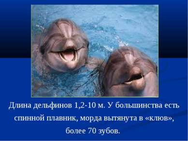 Длина дельфинов 1,2-10 м. У большинства есть спинной плавник, морда вытянута ...