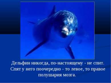 Дельфин никогда, по-настоящему - не спит. Спят у него поочередно - то левое, ...