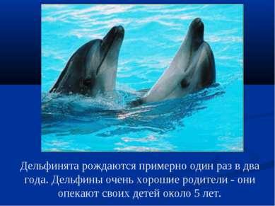 Дельфинята рождаются примерно один раз в два года. Дельфины очень хорошие род...