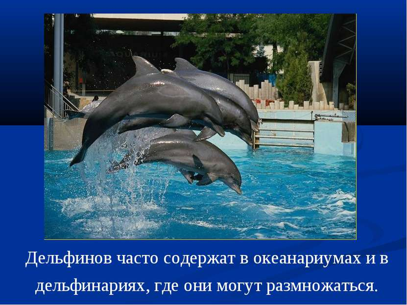 Дельфинов часто содержат в океанариумах и в дельфинариях, где они могут размн...