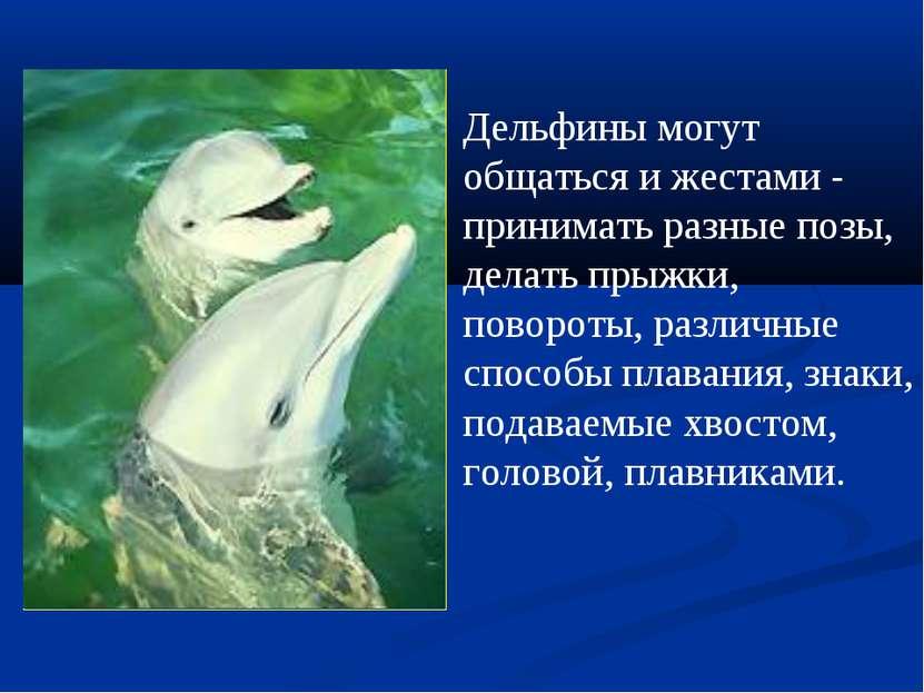 Дельфины могут общаться и жестами - принимать разные позы, делать прыжки, пов...
