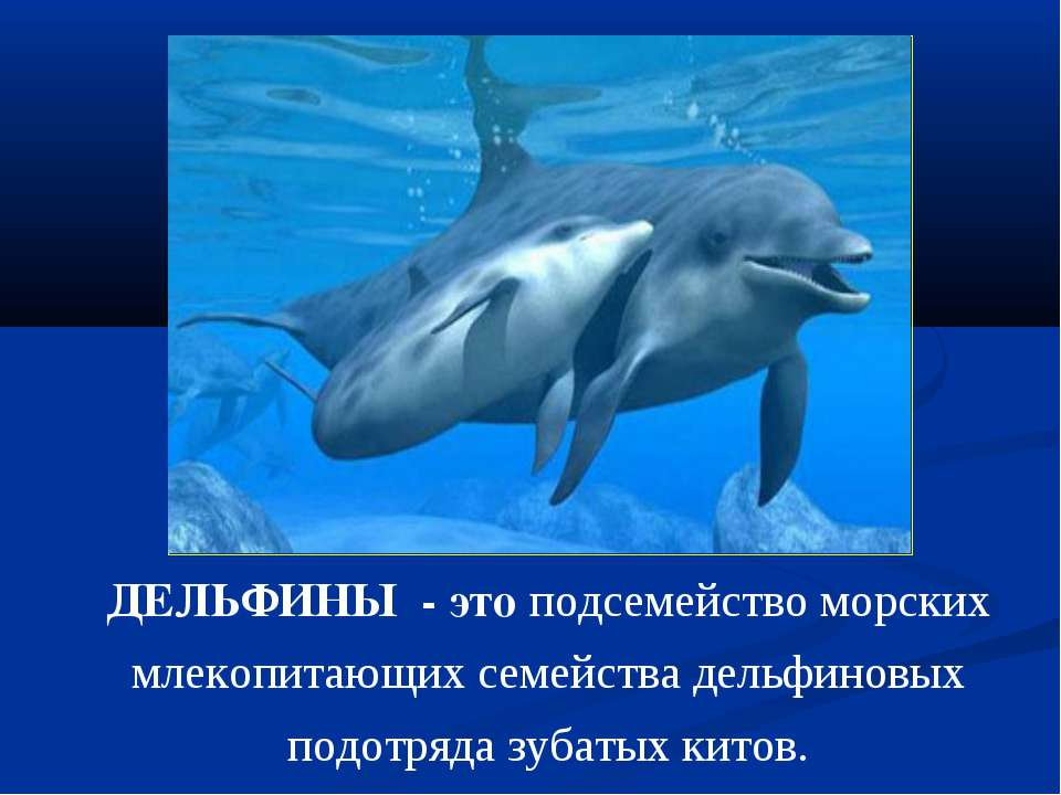 ДЕЛЬФИНЫ - это подсемейство морских млекопитающих семейства дельфиновых подот...