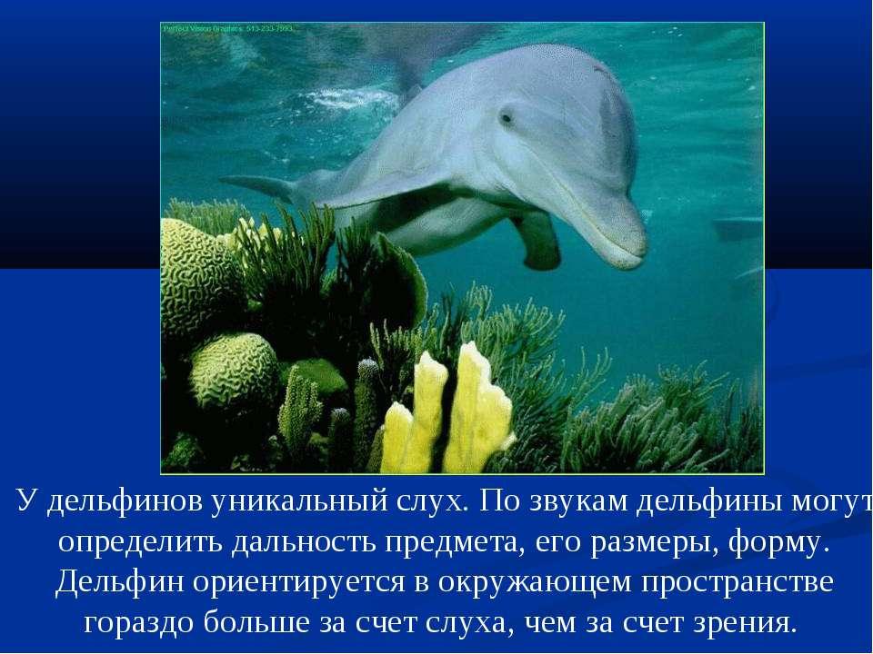 У дельфинов уникальный слух. По звукам дельфины могут определить дальность пр...