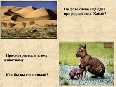 На фото слева ещё одна природная зона. Какая? Присмотритесь к этому животному...