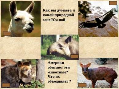 Как вы думаете, в какой природной зоне Южной Америки обитают эти животные? Чт...
