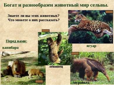 капибара Перед вами: Богат и разнообразен животный мир сельвы. ягуар Знаете л...