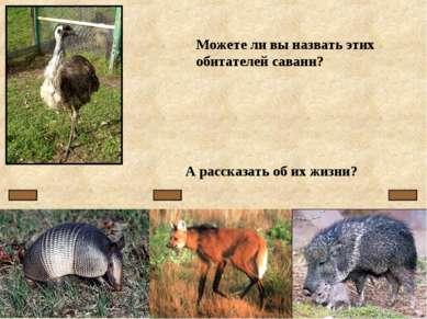Можете ли вы назвать этих обитателей саванн? А рассказать об их жизни?