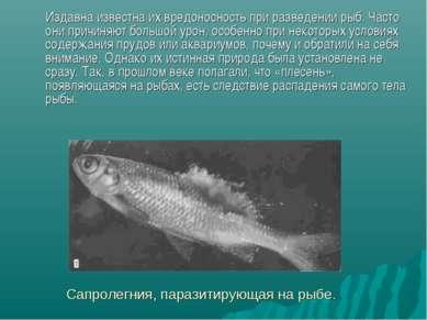 Сапролегния, паразитирующая на рыбе. Издавна известна их вредоносность при ра...