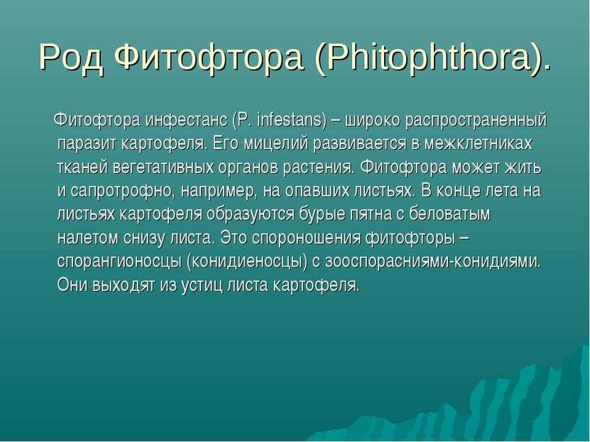 Род Фитофтора (Phitophthora). Фитофтора инфестанс (P. infestans) – широко рас...