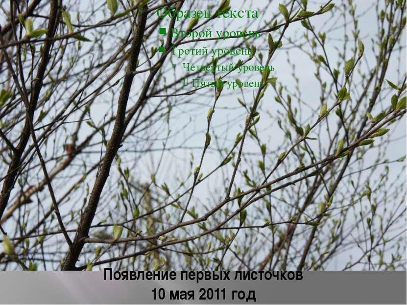 Появление первых листочков 10 мая 2011 год
