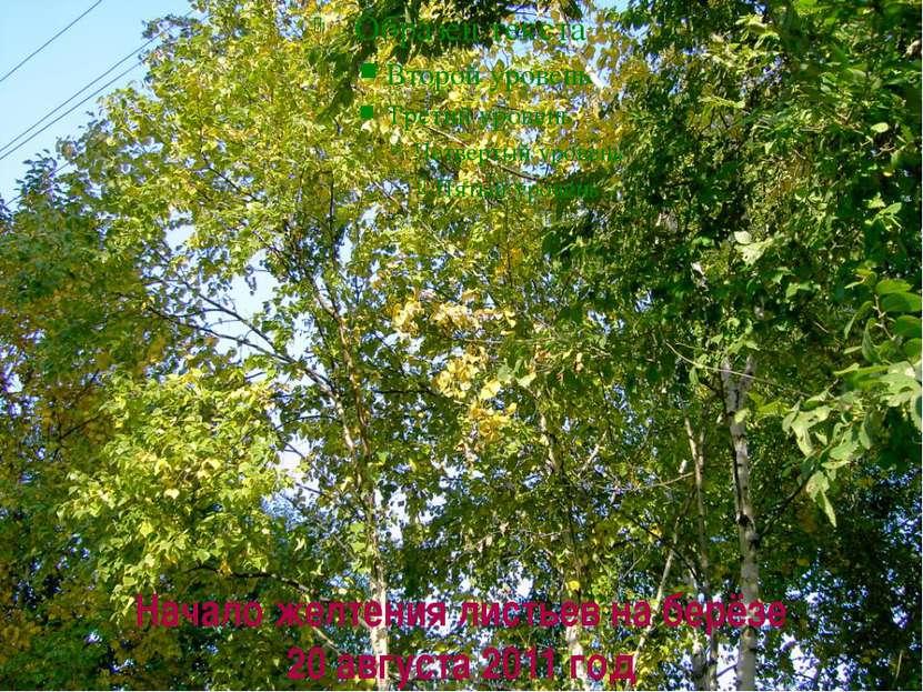 Начало желтения листьев на берёзе 20 августа 2011 год