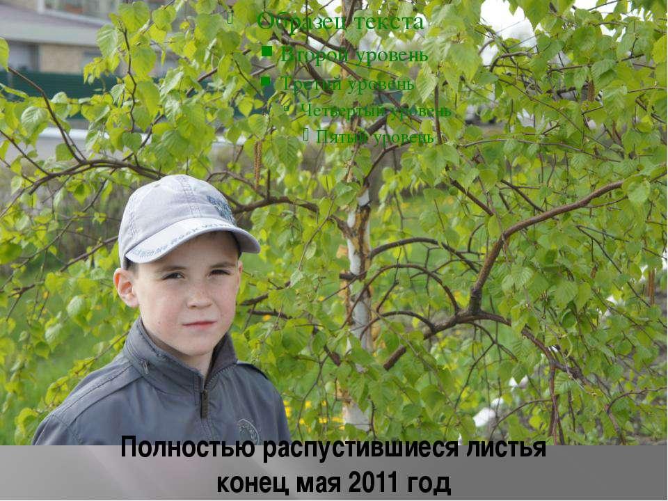 Полностью распустившиеся листья конец мая 2011 год