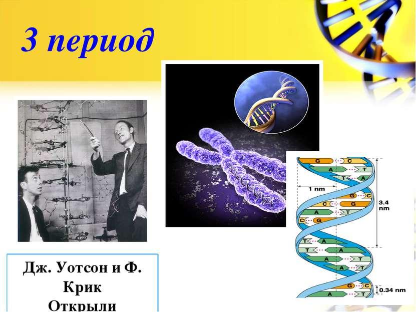3 период Дж. Уотсон и Ф. Крик Открыли структуру ДНК в 1953г.