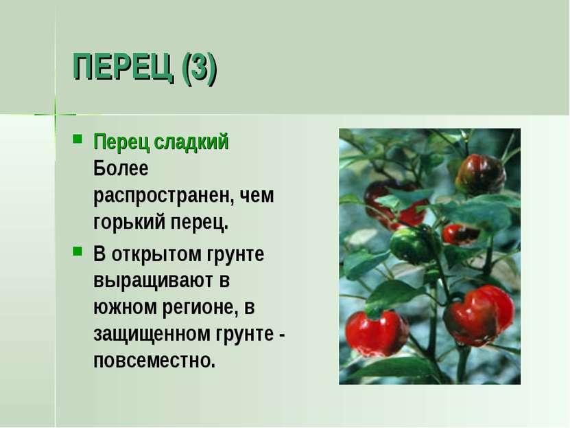 ПЕРЕЦ (3) Перец сладкий Более распространен, чем горький перец. В открытом гр...